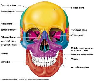 Anatomy And Physiology Chapter 5 Review Questions Answers